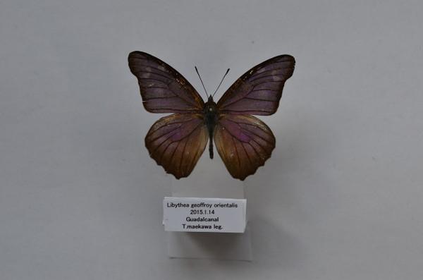 Dsc_3761