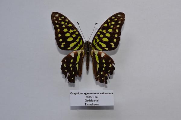 Dsc_3790