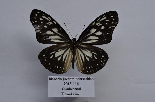 Dsc_3795