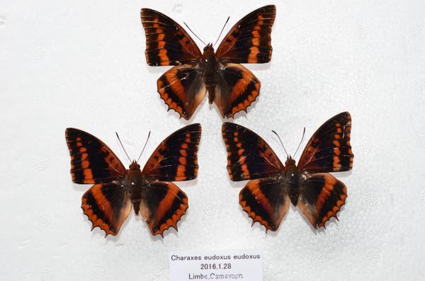 Dsc_3998