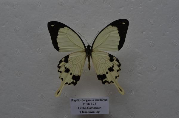 Dsc_4015
