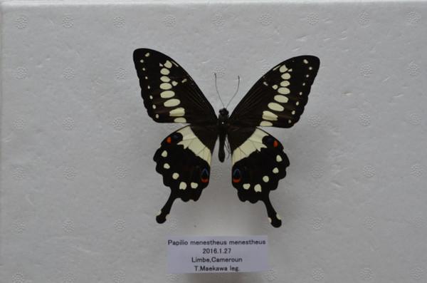 Dsc_4016