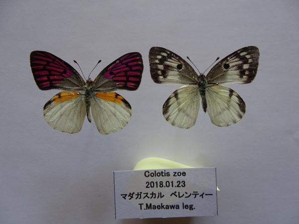 Dsc00543