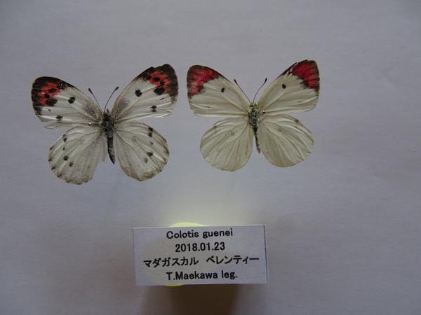 Dsc00542